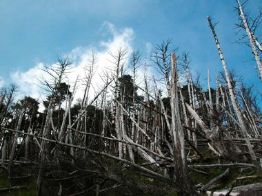 [自然]天川村こころ癒される豊かな森を守る事業