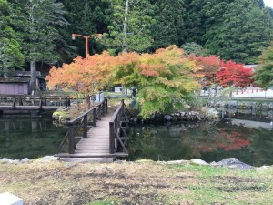 10月26日紅葉状況