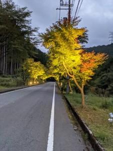 虻峠(県道21号線)ライトアップ開始のお知らせ